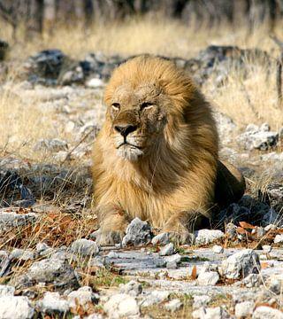 Koning van de Jungle sur Lyda Geeratz
