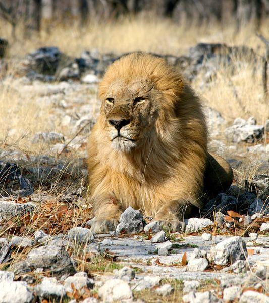 Koning van de Jungle van Lyda Geeratz