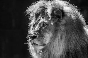 """""""Koning"""" van het Dierenrijk (Zwart-wit)"""