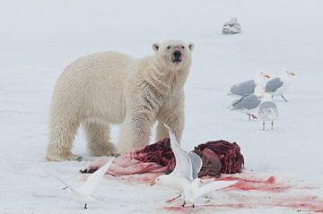 IJsbeer en Grote Burgemeesters(meeuwen) van Peter Zwitser