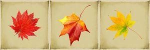 Drieluik herfst - herfstbladeren