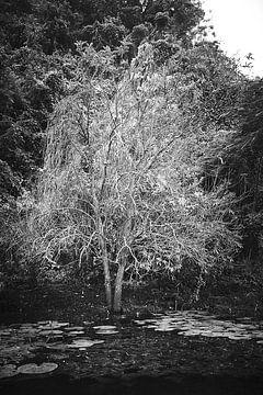 grijze boom in water bij Phong Nha-Ke Bang National Park Vietnam van Karel Ham
