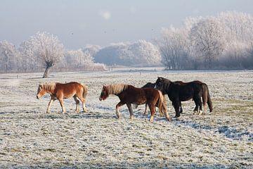 Horses von Nico van Remmerden