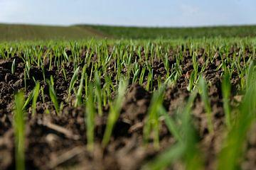 Aufstrebende Pflanzen auf einem abschüssigen Feld von Noud de Greef