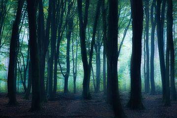 In het donkere bos van Ton Drijfhamer