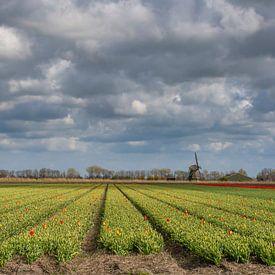 Tulpenbedden met molen van Margreet Frowijn