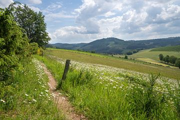 Landschaft um Winterberg, Sauerland, Deutschland von Alexander Ludwig