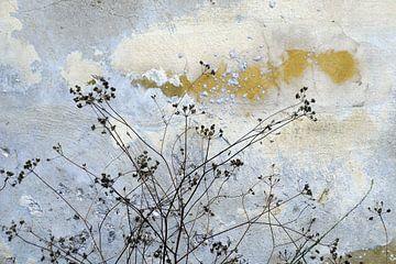 Muurbloempjes 1 van Annelies van der Vliet