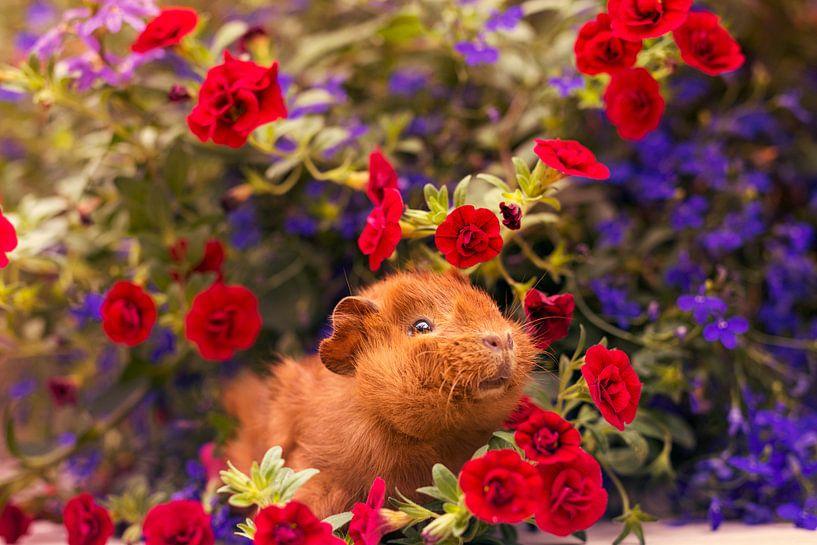 Guinea Pig Flowers van Marloes van Antwerpen