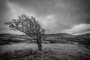 Tree, Landscape, Black and white