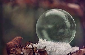 Frozen bubble on snowy hydrangea van Natascha IPenD