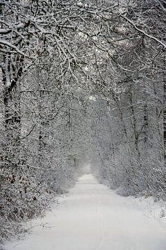 Winterbos von Ronald Jansen