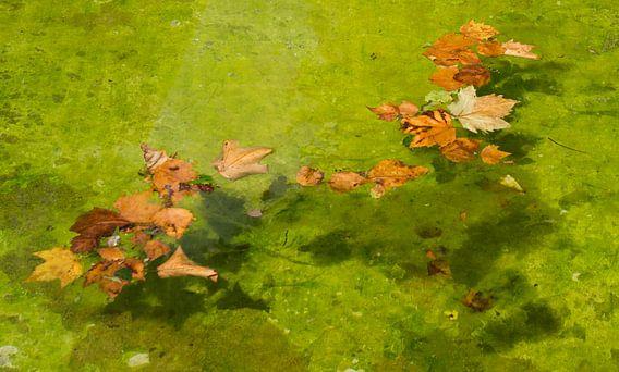 Drijvende herfstbladeren