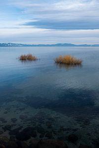 Lake Tahoe van