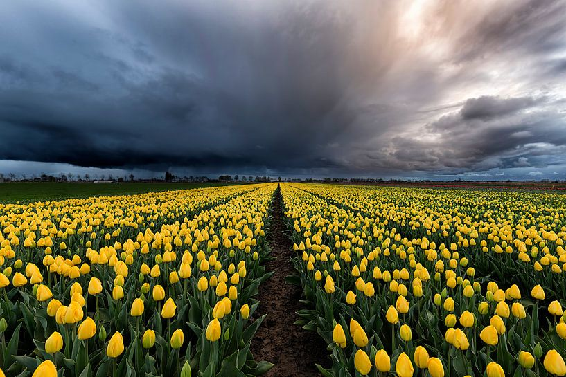 Tussen de Tulpen en de storm van Costas Ganasos