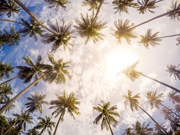 Summer paradise van Christ Clijsen