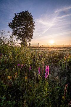 Bloemen bij mistige zonsopkomst van Yorben  de Lange