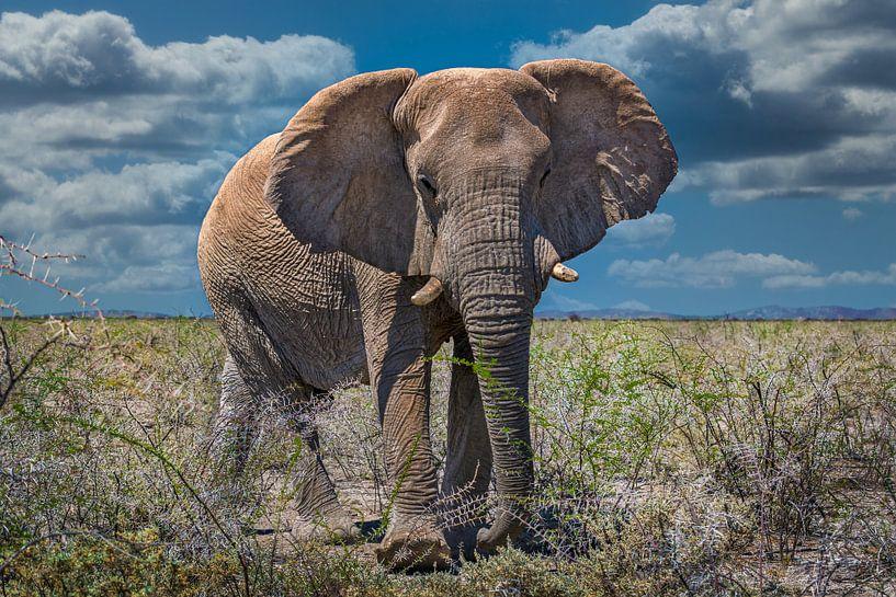 Ontmoeting met een grote olifant in Etosha, Namibië van Rietje Bulthuis