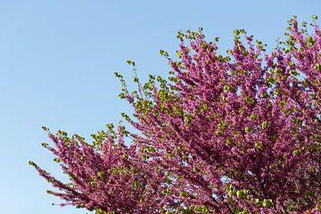 Bloesems in de lente van Mickéle Godderis