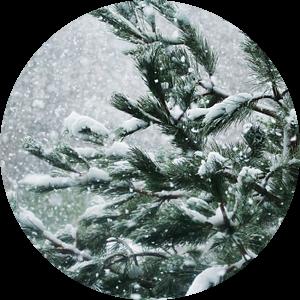 Sneeuwblazen van Petra Dreiling-Schewe