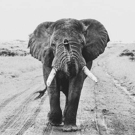 Hey you - olifant