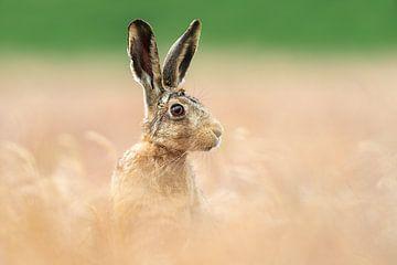 Ein kleine Hase von Gladys Klip