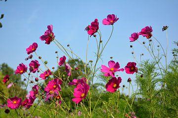 Wilde bloemen van miranda  Leenheer