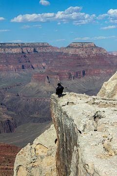 Raven Grand Canyon van Florian Kampes