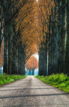 Boeren Landweg van Hans Soowijl