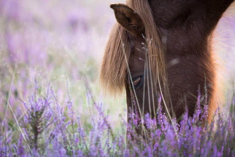 Paard op Posbank van Peter Bijsterveld