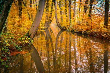 gespiegelte Bäume von Göran Dekker