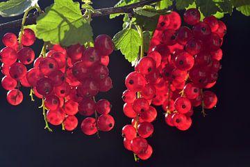 Rote Johannisbeeren von Ulrike Leone