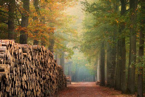 De houten muur