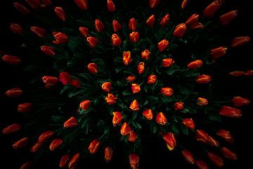 Fierté hollandaise, la tulipe sur Eus Driessen
