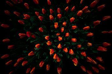 Fierté hollandaise, la tulipe sur