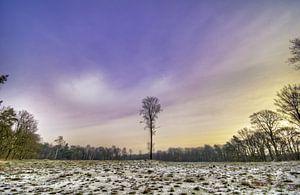 Nederlands Boslandschap Prattenburg in Veenendaal in de Utrechtse heuvelrug van
