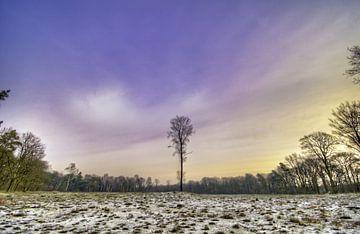 Nederlands Boslandschap Prattenburg in Veenendaal in de Utrechtse heuvelrug von Jeroen Bos