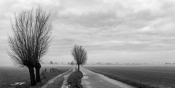 Mist in de polder van Ton de Koning