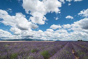 Lavendelveld met wolken Valensole van