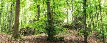 Felsen im grünen Wald von Tobias Luxberg