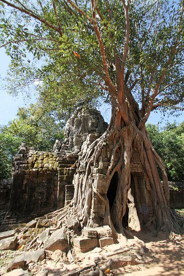 Ta Som Tempel in Angkor