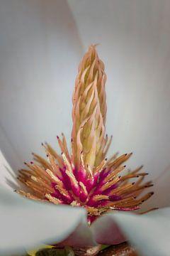 Lente - Volgroeide Magnolia van Jan van der Knaap