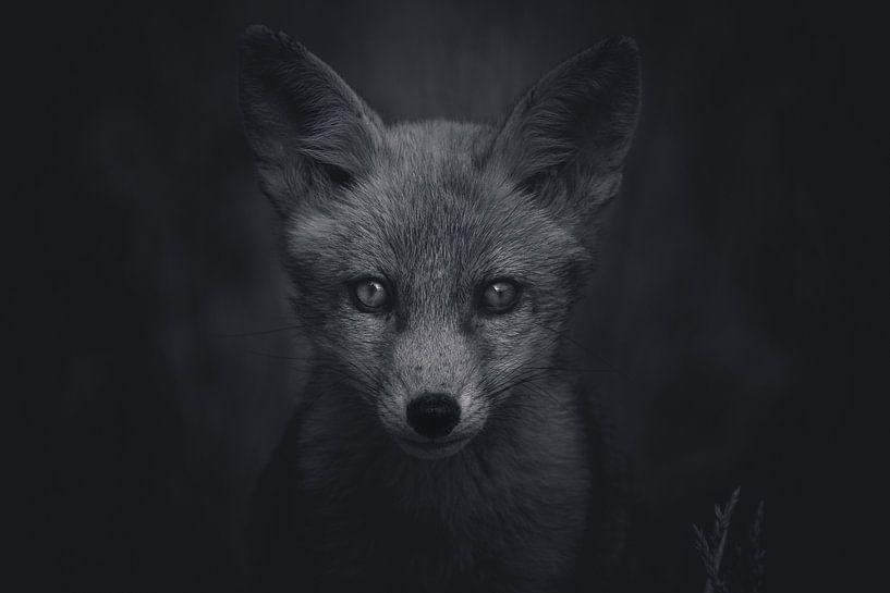 Portret van een jonge vos in de Nederlandse natuur in zwart-wit van Maarten Oerlemans