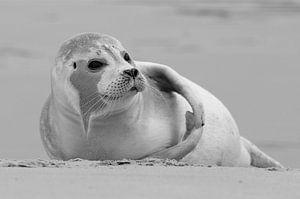 Beach Seal van René Koert