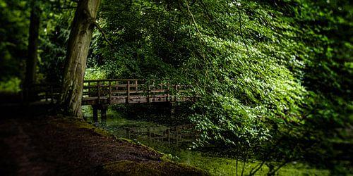 Natuurfoto van een Hollands park met oude bomen, een houten bruggetje en slootjes
