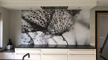 Kundenfoto: Dandelion blackandwhite von Julia Delgado, auf nahtloser fototapete