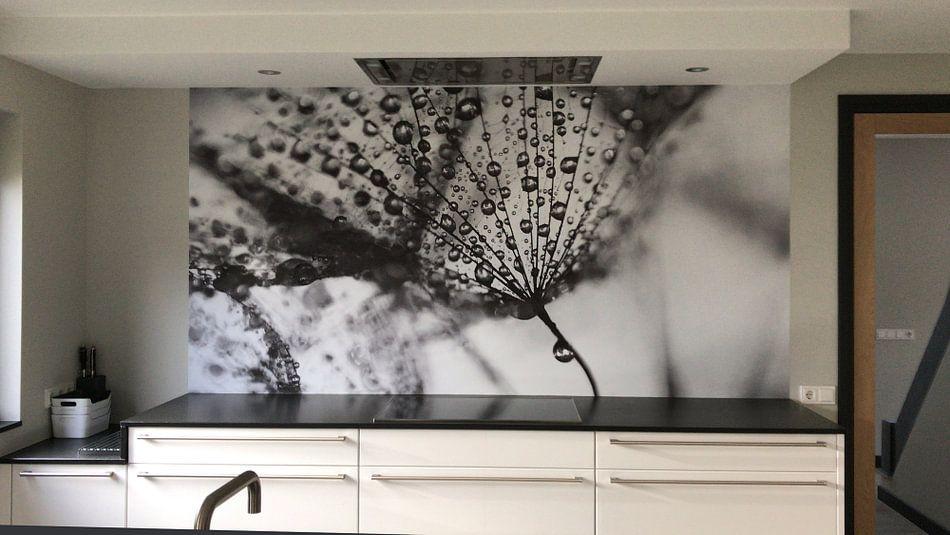 Kundenfoto: Dandelion blackandwhite von Julia Delgado