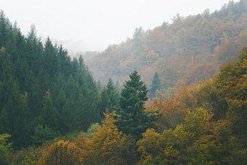 Mistige herfstbossen die in de mist verdwijnen van Patrik Lovrin