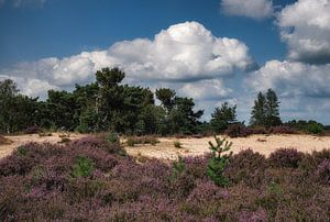 Heide in bloei van jacky weckx