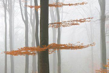 Brouillard dans la forêt  sur Barbara Brolsma